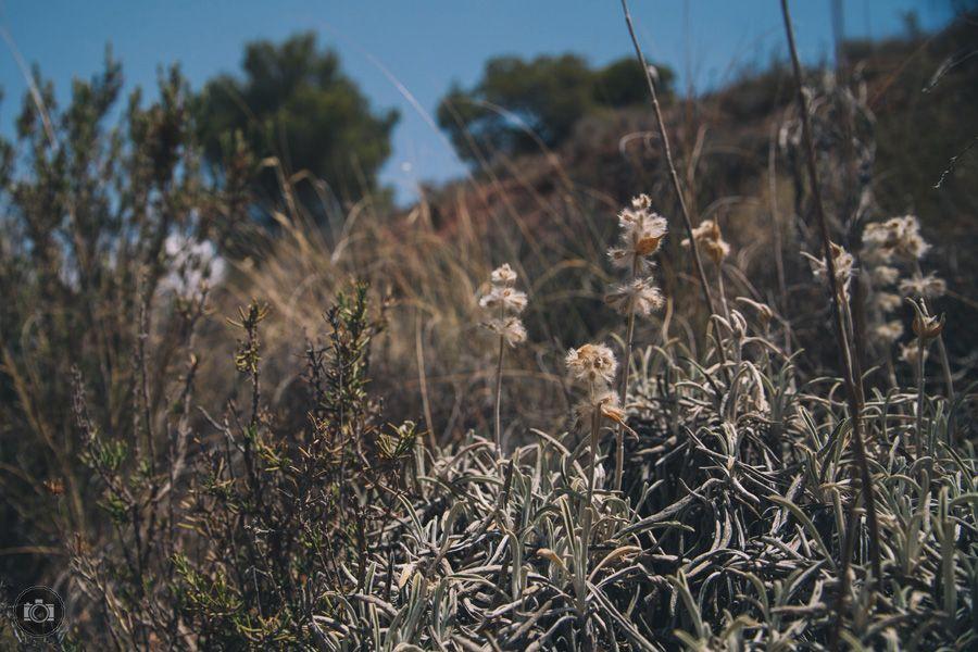 Полевые цветы в испанской степи